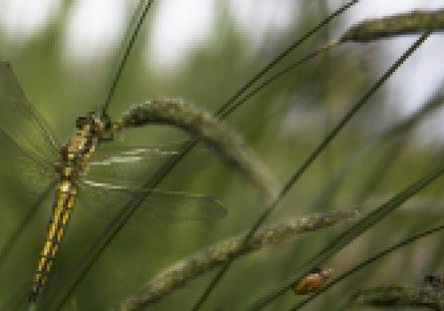 Monitoring en insecten